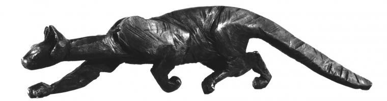 schwarzekatz